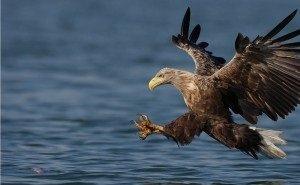 С выпуском хищных птиц в Сочи возникли сложности