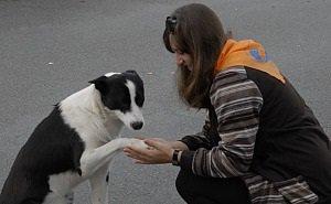 Судом Анапы введён запрет на отстрел бездомных собак