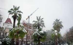 В Сочи «утепляют» пальмы