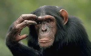 Сочинских приматов готовят к «марсианскому» эксперименту