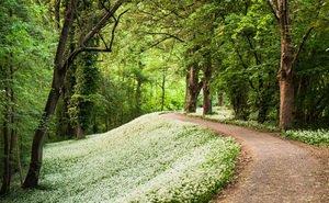 В Краснодаре экологи предлагают создать крупнейший лесопарк