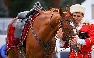 Почему в условиях возрождения казачества в казачьем крае нет места для лошадей?