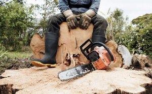 На Кубани вдвое сократилось количество незаконных вырубок леса