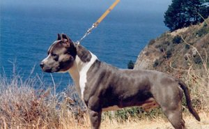 На пляже Анапы на маленьких детей напала бойцовая собака