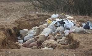 Под Новороссийском обнаружены десятки туш мёртвых свиней
