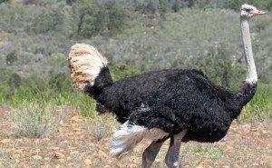 Шокирующее видео с окровавленным страусом в Дендрарии взорвало Интернет