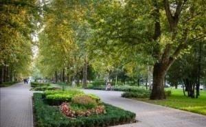 На кадастровый учёт поставлено на Кубани только 50% «зелёных зон»
