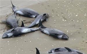 Новороссийцы пришли в ужас от грязи в море, мёртвых птиц и обожжённых дельфинов