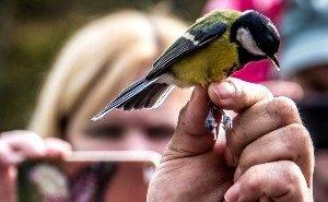 В Сочи начали пересчитывать птиц