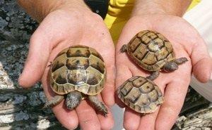 В Геленджике работает единственный в России Центр по реабилитации черепах