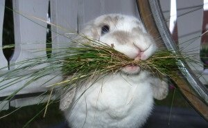 Кубанские казаки будут разводить кроликов