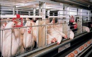 Для «Раевской птицефабрики» нашли инвестора