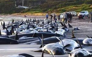 Мог ли ВМФ стать причиной массовой гибели дельфинов в Новороссийске?