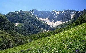 С эрозией горных склонов Сочи будут бороться растения