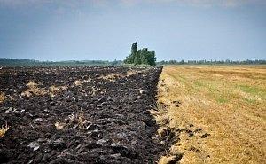На Кубани появится реестр по отказам в продлении аренды (выкупа) сельхозземель