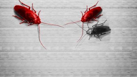 Дезинсекция от Upeco - быстрое уничтожение насекомых