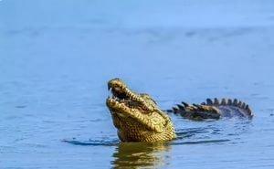В море у Анапы с детьми купается крокодил