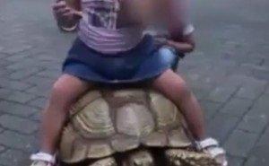 Пляжные фотографы в Сочи с крашеных собак переключились на черепах