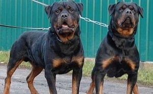 В Сочи ужесточают правила выгула собак