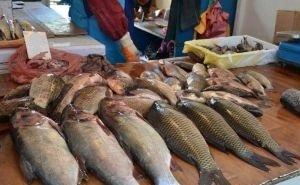 Дохлую рыбу из Карасунского озера везут на продажу