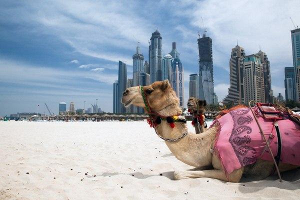 Экскурсии в неповторимый мир мегаполиса ОАЭ
