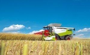 На Кубани прогнозируют падение объёмов урожая риса
