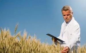 Кубань побила собственный рекорд по урожаю-2016 и по качеству зерна