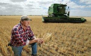 Недовольство аграриев Кубани постепенно идёт на спад
