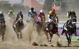 Краснодарский ипподром принял скачки на приз губернатора