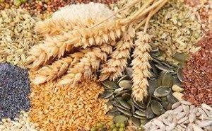 На Дне поля аграрии узнали о новинках семеноводства