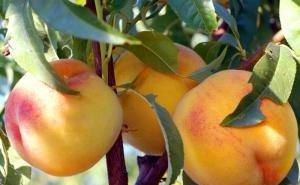 Что мешает выращивать на Кубани овощи и фрукты без химии?