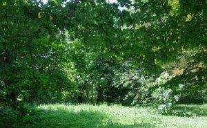 Зелёные зоны и пояса Краснодара разрешили застраивать