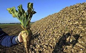 Кубанских аграриев преследует чёрная полоса