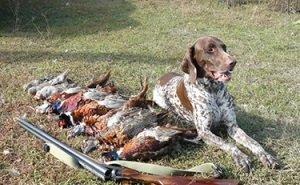 На Кубани в первые дни открытия охотничьего сезона подстрелили 5 лебедей и 8 краснокнижных птиц