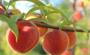 Аграриев Кубани поддержит «Союз садоводов России»