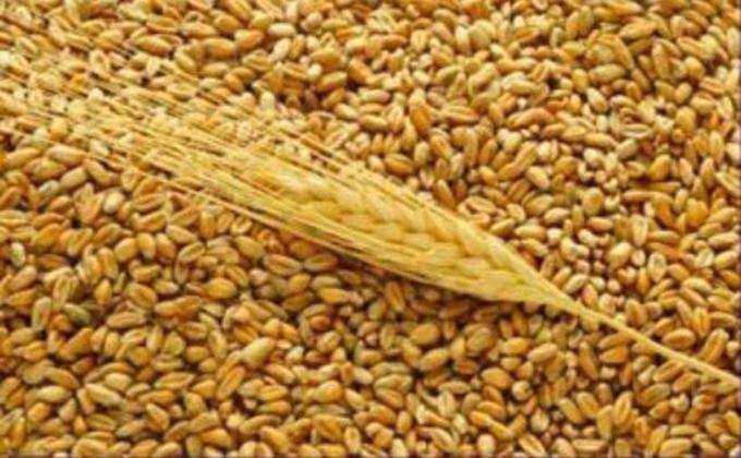 Высокопродуктивные сорта зерна на lgseedsru