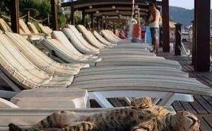 Туроператоры ожидают подорожания летних путёвок в Сочи