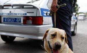 На ноябрьские праздники в Краснодаре усиливают меры безопасности