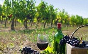 Туристов в Краснодарский край заманивают вином