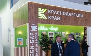 Власти Кубани готовы вести инвесторов «за руку»