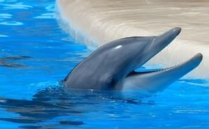 На Кубани разоблачена банда, незаконно добывавшая дельфинов