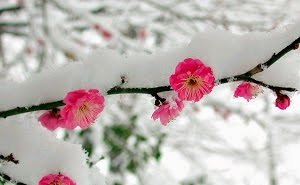 Цветущие на Кубани зимой деревья урожая не дадут