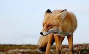 На Кубани массово гибнут дикие животные