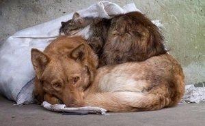 В Краснодаре продолжаются случаи чудовищного обращения с животными