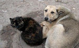 Сочи в преддверии ЧМ-2018 «очищают» от безнадзорных животных