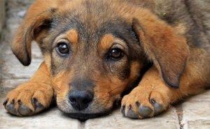В Сочи провели пикет против убийства животных
