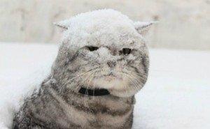Снегоуборочная техника вышла в Краснодаре в первый раз за зиму