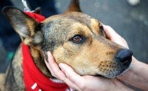 Полиция проверит фирму, отравившую и выбросившую в ущелье более 20 собак