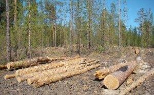 Минприроды РФ недовольно тем, как власти Кубани управляют лесами