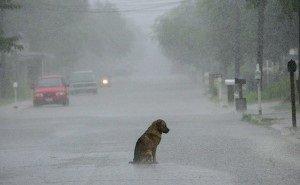 Кубанцев испугал цветной дождь